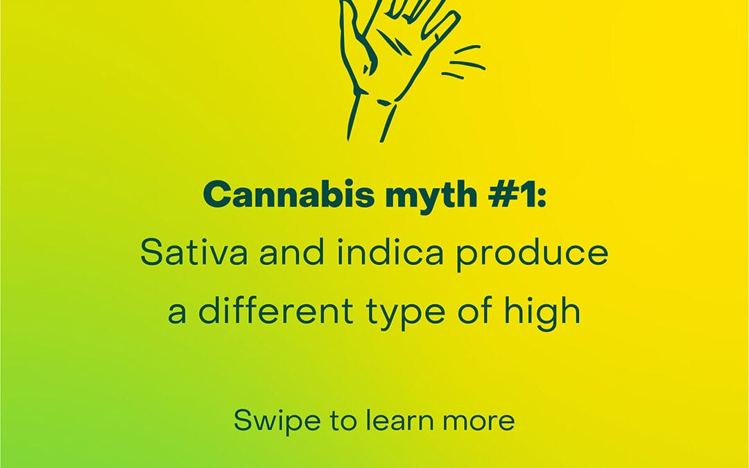 Stop choosing cannabis by indica or sativa. Here's why.