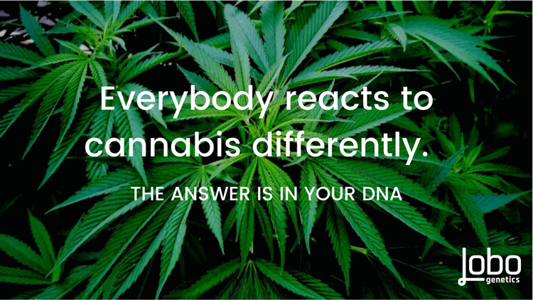 WHAT'S DNA GOT TO DO WITH MY CANNABIS JOURNEY?