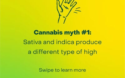 Cannabis Myth #1 – Sativa vs Indica